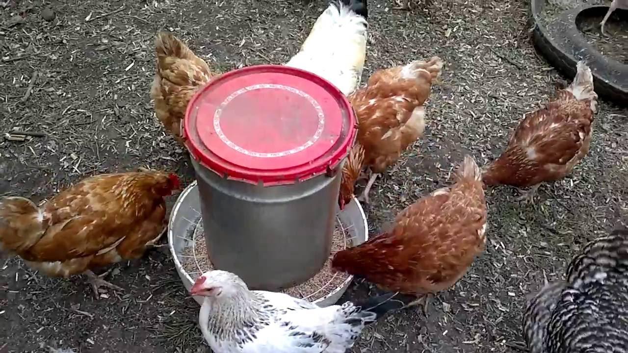 Кормушка для цыплят своими руками видео фото 685