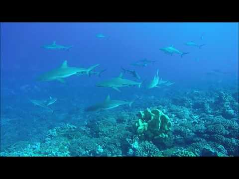 Tahiti Fakarava 23 May 2017
