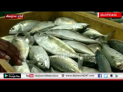 MANGALORE-DEEP SEA FISHING BAN LIFTED FROM TODAY