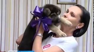 Андрей Кропоткин подарил поисковикам ассоциации «Твори добро» щенка немецкой овчарки