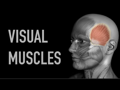 Visual Muscles: Face Muscles - Black Background