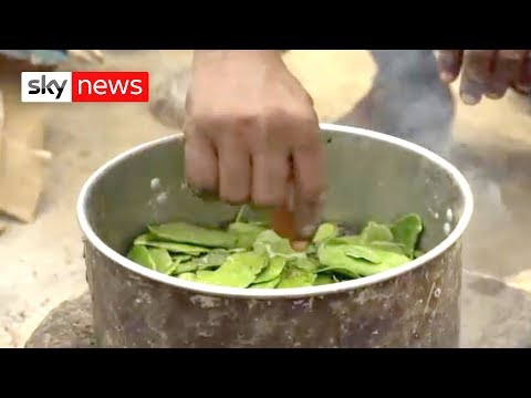 Yemenis eat leaves to survive as country heads into 'abyss'