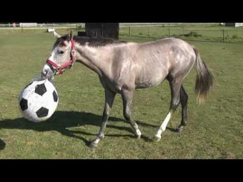 Footballing Horse Ambrette Absolute