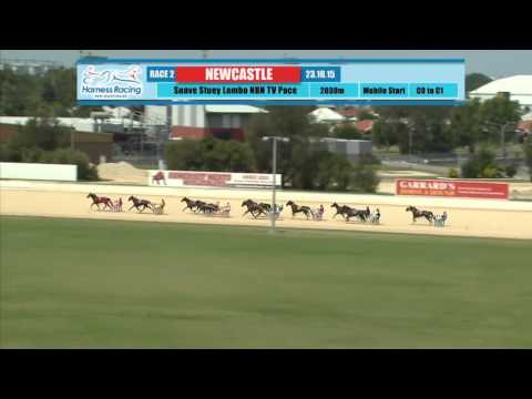 NEWCASTLE - 23/10/2015 - Race 2 - SUAVE STUEY LOMBO NBN TELEVISION NEWCASTLE H.O.T.Y PACE