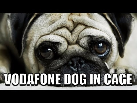 CUTE VODAFONE DOG IN A CAGE( THIS  PUG DOG)