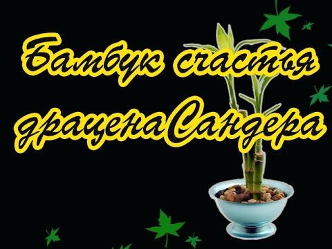 Продажа и покупка комнатных растений и комнатных цветов на крупнейшей площадке объявлений в беларуси. Разнообразные растения и цветы по.