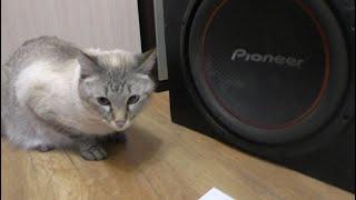 Сабвуфер с помойки, проверка. Кот в шоке.