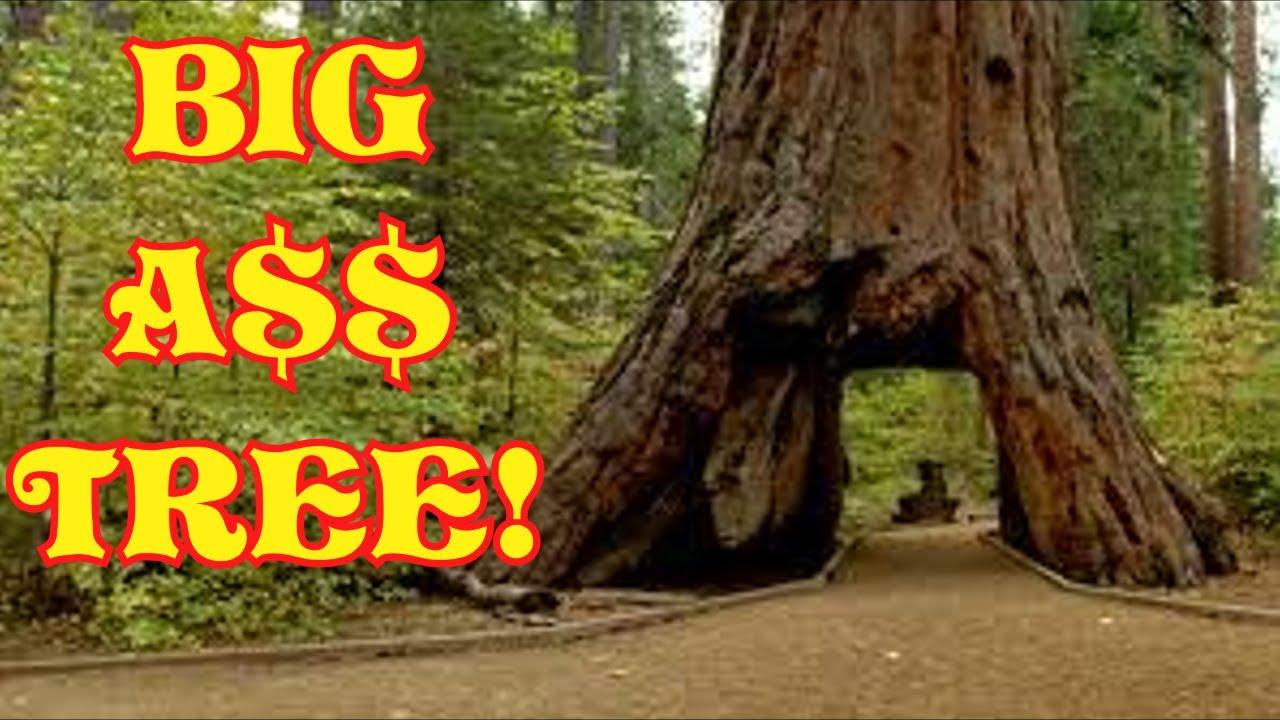 Download Big Tree 😂COMEDY😂 (David Spates)