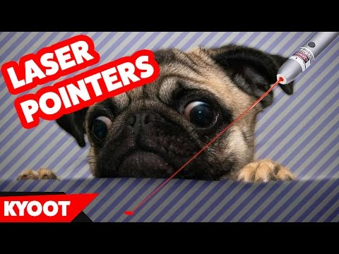 Funniest Dog & Cat vs. Laser Pointers Videos of 2016 Weekly Compilation | Kyoot Animals