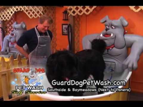 Jacksonville southside self service dog wash and dog grooming 1 jacksonville southside self service dog wash and dog grooming 1 solutioingenieria Choice Image