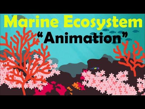 MARINE ECOSYSTEM (Animation)