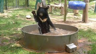 Celebrating 20 years of incredible bear rescues with Animals Asia