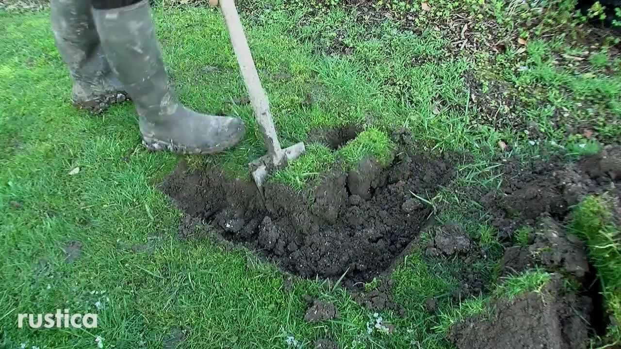 planter un cognassier