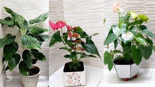 Como Decorar Sua Casa Com Plantas e Ter Sucesso no Cultivo
