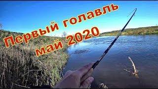 Рыбалка весной на реке Первый голавль 2020 года