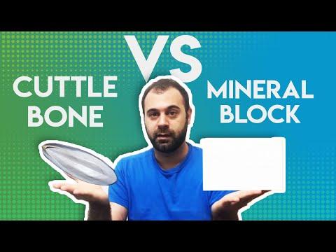 CuttleBone Vs Mineral Block For BIRDS!
