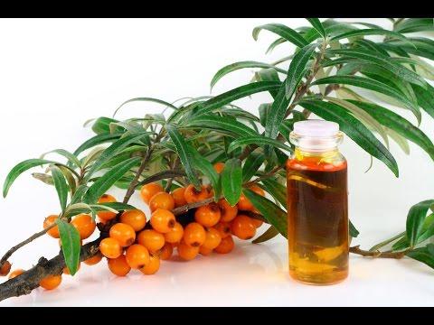 Лечение водорослями: что это – водоросли, фото видов