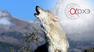 """Ясон Бадридзе: """"Человек в стае волков"""""""