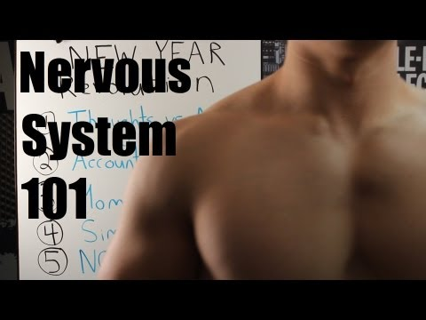 Nervous System 101: Hypertrophy, Strength and Maximizing Your Genetic Potential