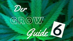 Indoor Growing Guide [06] - Topping