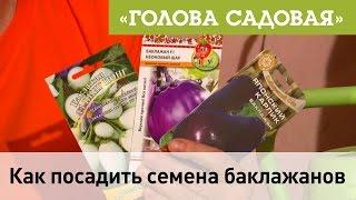 Голова садовая - Как посадить семена баклажанов(В этом видео мы вместе посадим, семена баклажанов. Я расскажу как посадить семена баклажан, как ухаживать..., 2017-01-05T14:00:23.000Z)