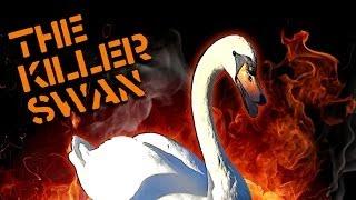 The Killer Swan