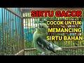 Sirtu Gacor Cocok Untuk Memancing Sirtu Bahan  Mp3 - Mp4 Download