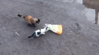 Как кот ловит мышей