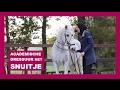 Mijn 23 jarige pony in de Academische Rijkunst | lees beschrijving! | snuitable