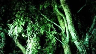 Clovis - Res Ipsa Loquitur