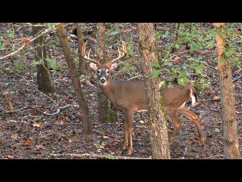 Hunting A Giant Alabama Buck