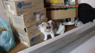 Что будет, если кошке(коту) наклеить скотч.