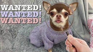 VLOG: Потеряли собаку в магазине Леруа Мерлен!
