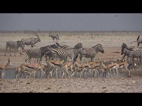 Namibie & Botswana Safari(deel 1)  (Sony FDR-AX 53).