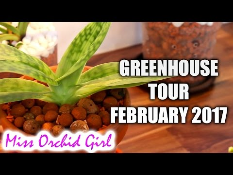 Orchid Greenhouse tour - February 2017