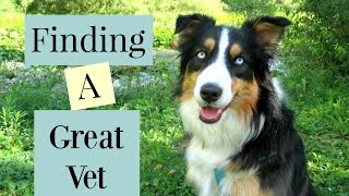 How to Find A Great Vet |Life With Aspen|