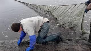 Проект Аренда водоёма 65 ДР Тестовая рыбалка