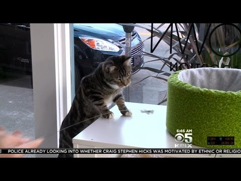 How An Oakland Man Created The Nation's First Cat Cafe