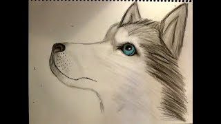 wolf pencil easy drawing sketches cartoon draw