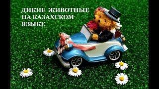 Дикие животные на казахском языке. Развивающее видео