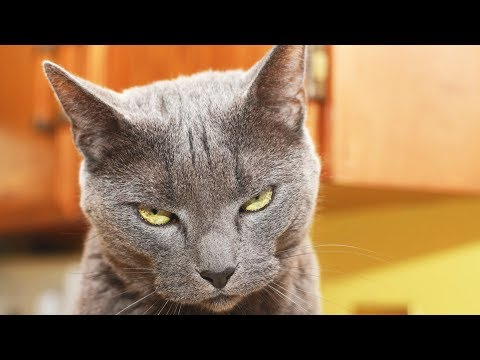 what to do about bad cat behavior