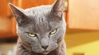 Passive AGGRESSIVE CATS 😹 Funny Naughty Cats [Funny Pets]