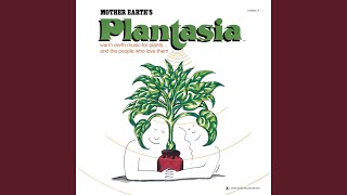 Concerto for Philodendron & Pothos