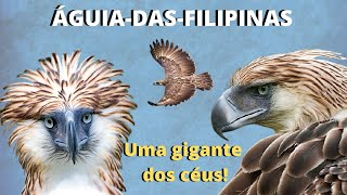 A FANTÁSTICA ÁGUIA-DAS-FILIPINAS - UM ANIMAL FORTE, PODEROSO E MUITO RARO!