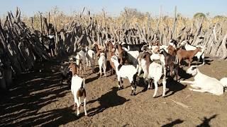My Village Ondukuta. NAMIBIA