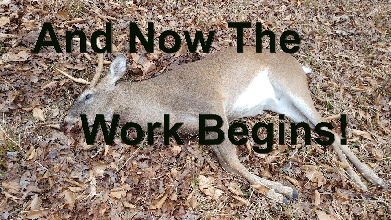 Download How to Field Dress A Deer Correctly-Easiest Way To Gut A Deer!