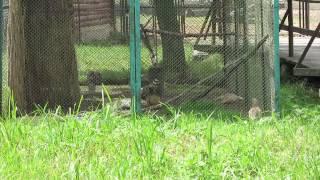 Птицы в минском зоопарке.(, 2014-07-23T16:20:25.000Z)