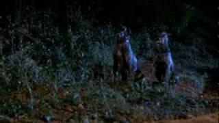 ZOLTAN: HOUND OF DRACULA (1978; trailer) Reggie Nalder
