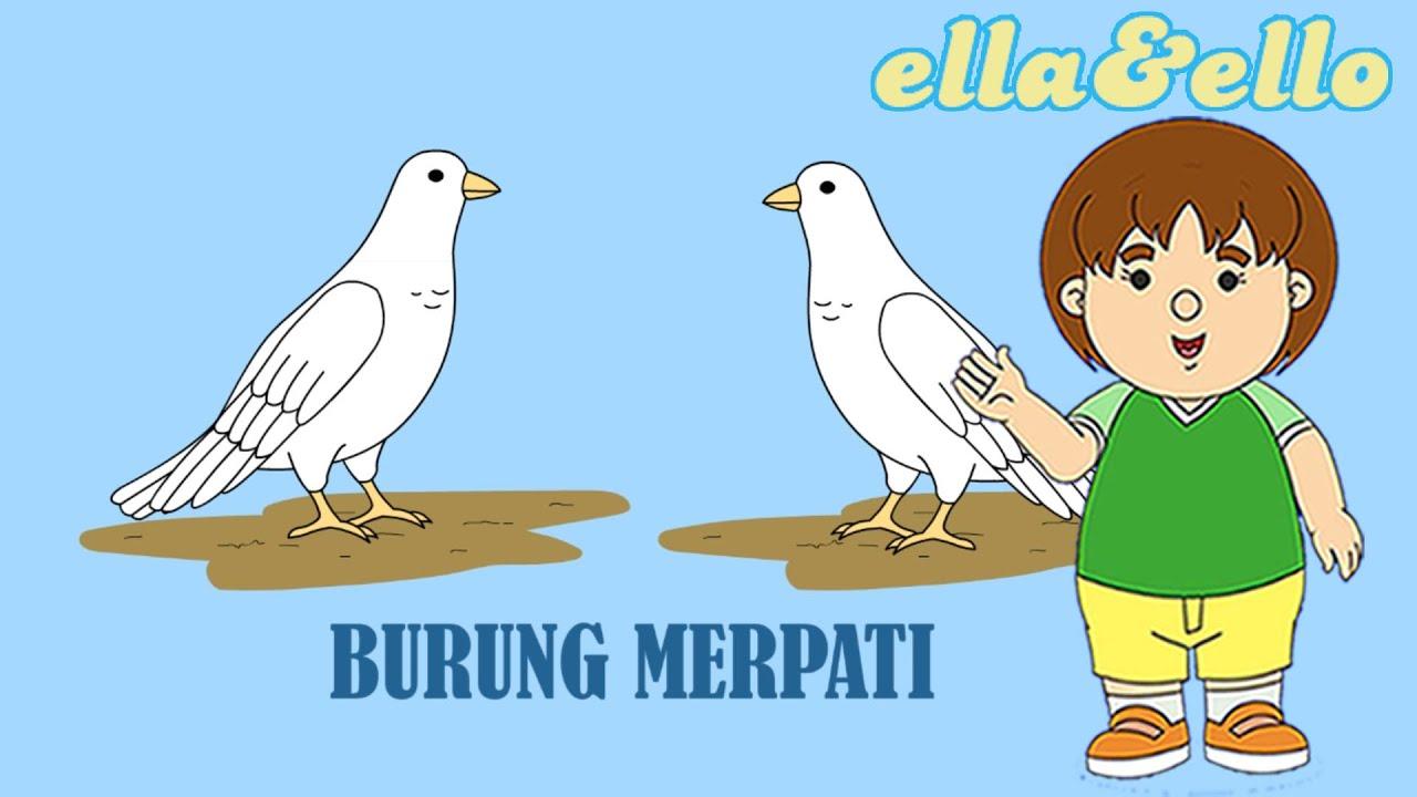 Mengenal Burung Merpati   Puri Animation