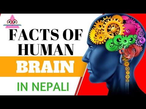 Brain|25 Amazing Human Brain Facts (Based On The Latest Science)-In Nepali